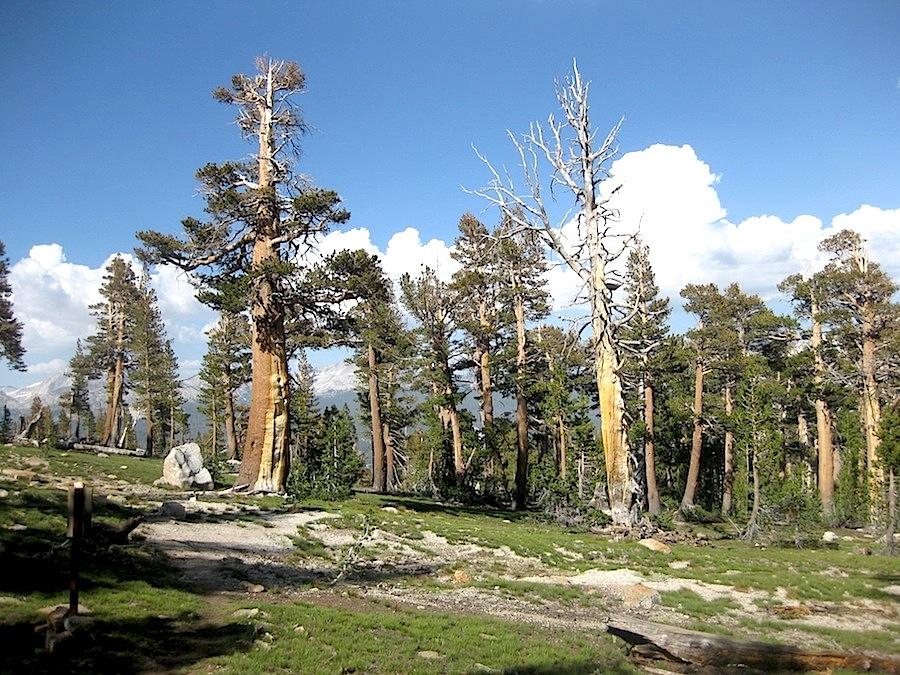 Les forêts à plus de 3500 mètres !