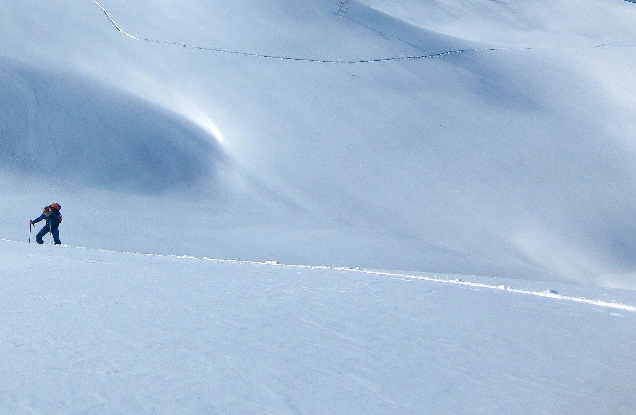 Désert neigeux....